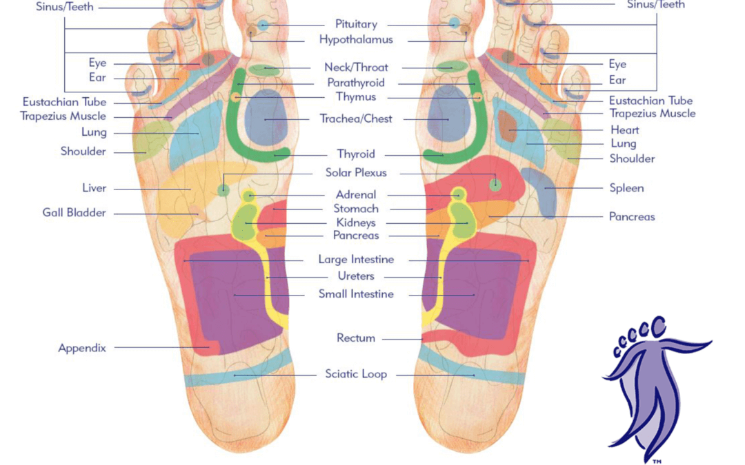 Reflexology and your bladder health - suehaynes