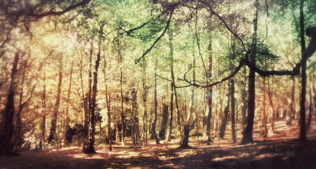 Woodland Meditation for Relaxation